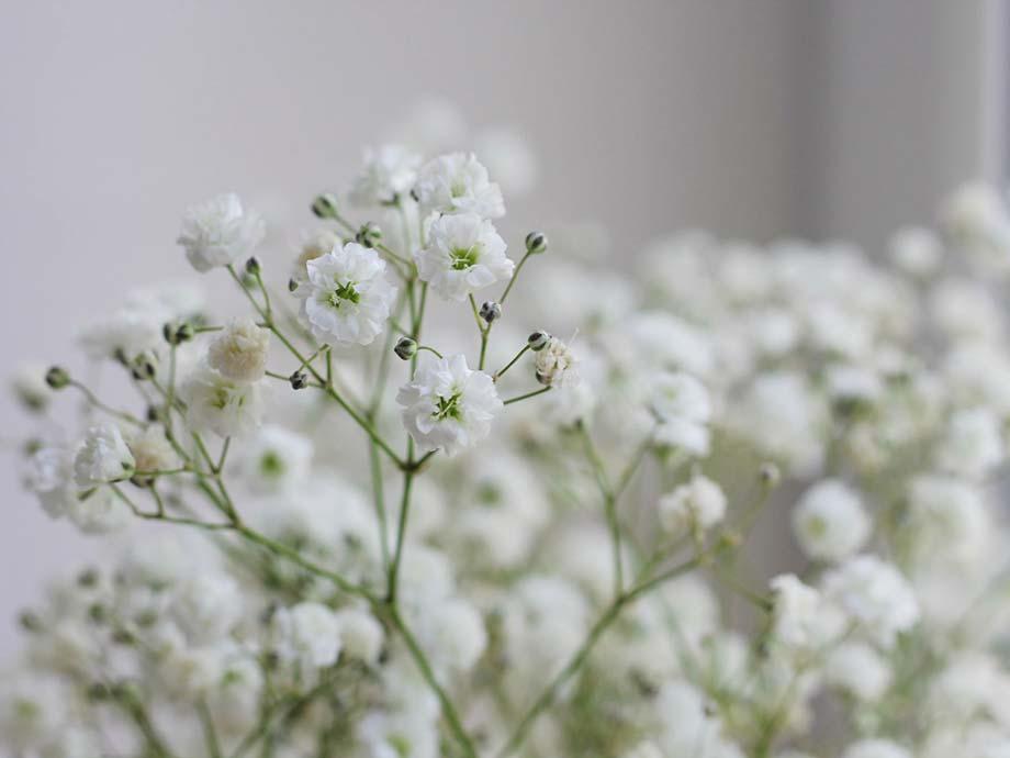 Gypsophila fiori matrimonio