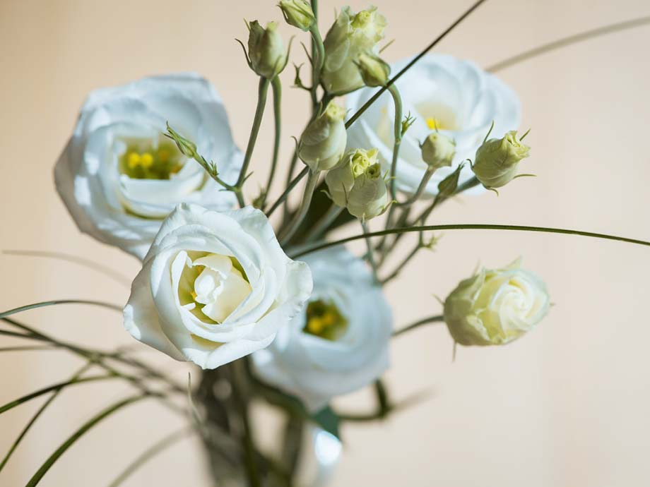 Lisianthus fiori più belli matrimonio
